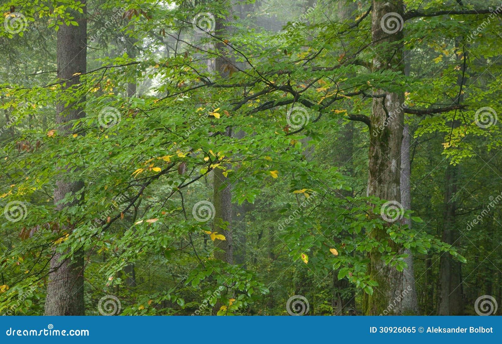 branche humide d 39 arbre de charme photo libre de droits image 30926065. Black Bedroom Furniture Sets. Home Design Ideas