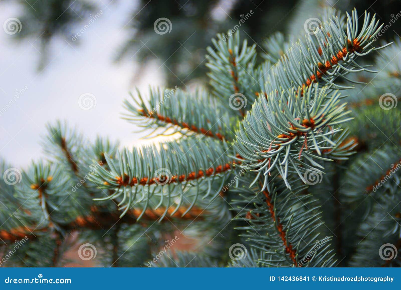 Branche impeccable bleue dans un jour nuageux