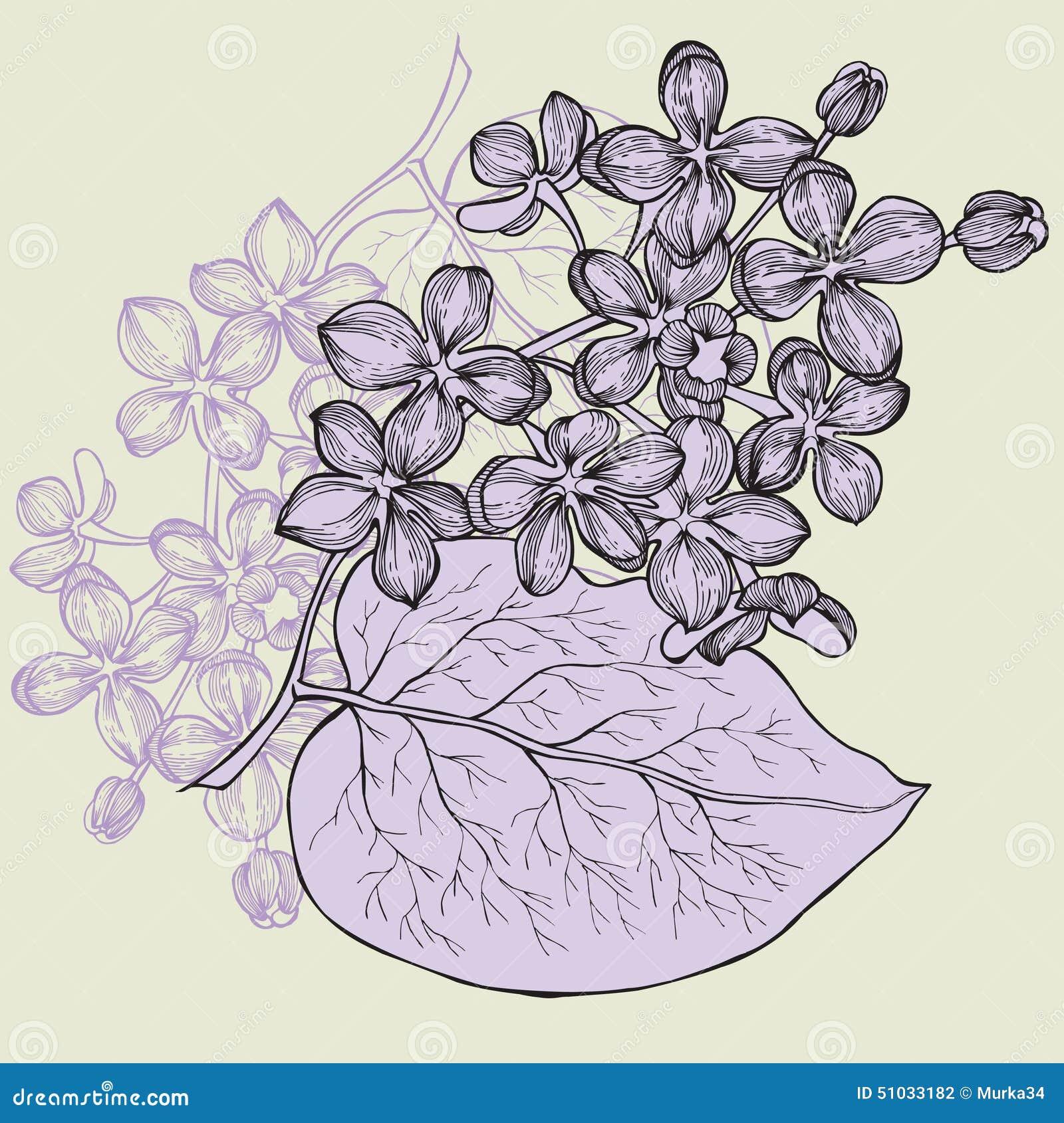 Branche lilas main dessin illustration de vecteur - Dessin de lilas ...