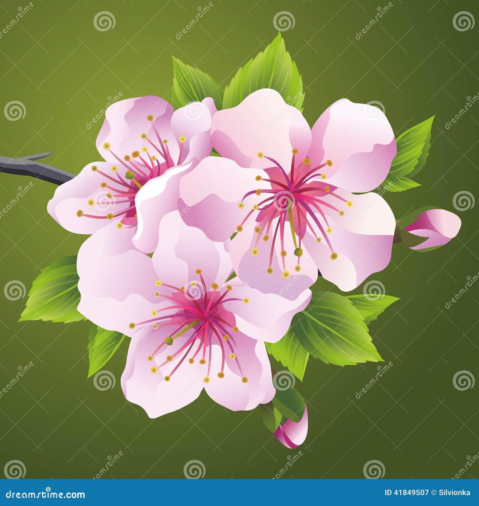 Branche se d veloppante d 39 arbre japonais sakura illustration de vecteur image 41849507 - Arbre japonais rose ...