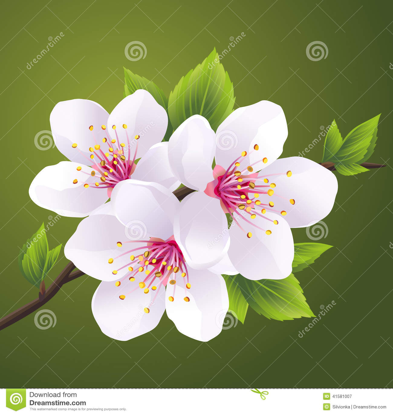 Branche se d veloppante de sakura cerisier illustration - Branche de cerisier japonais ...