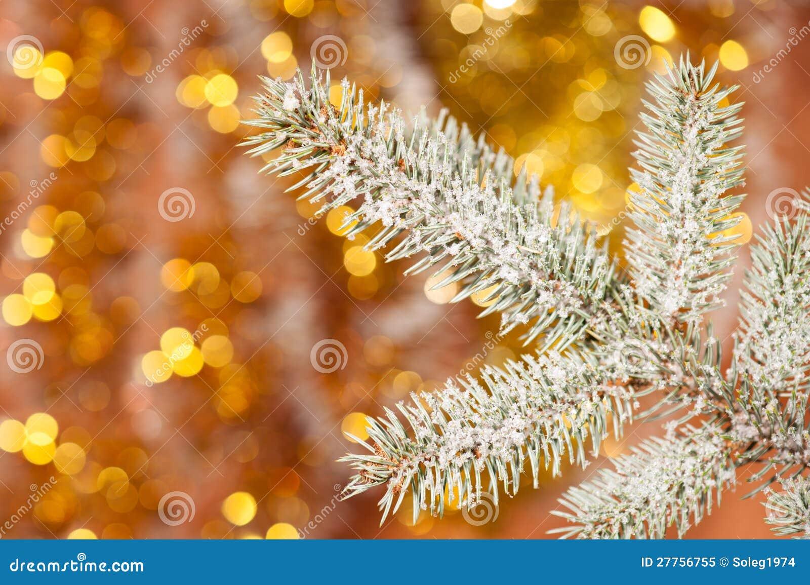 Branchement d arbre de sapin avec la neige sur d or
