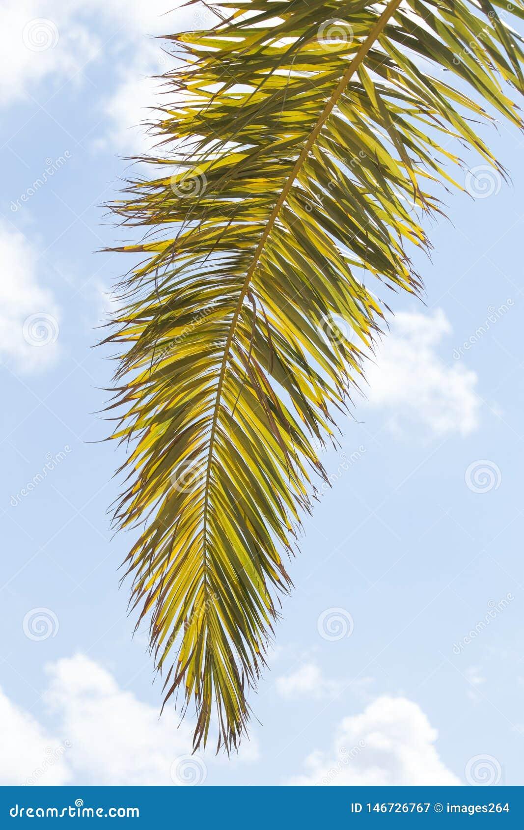 Branchement de palmier