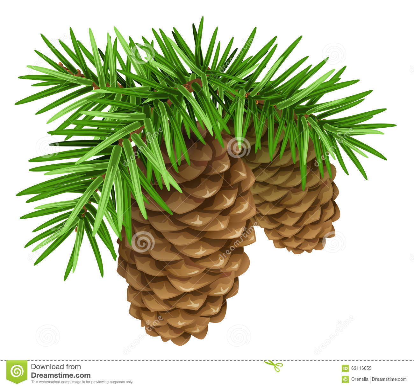Branchements de pin avec des cônes