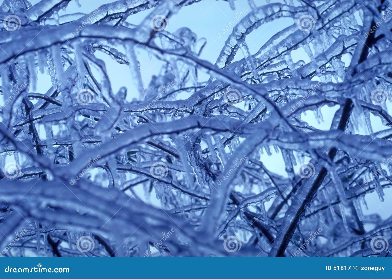 Branchements glacials
