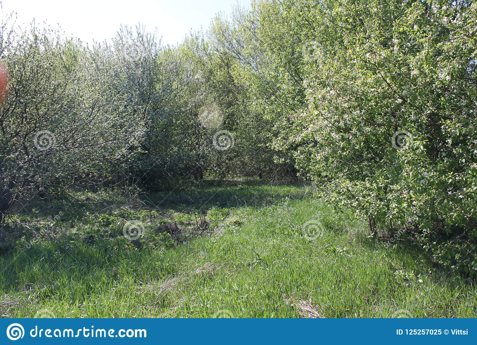Branches épaisses d un champ de pommiers abandonné