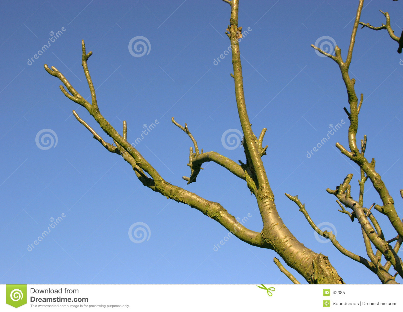 Branches against blue sky