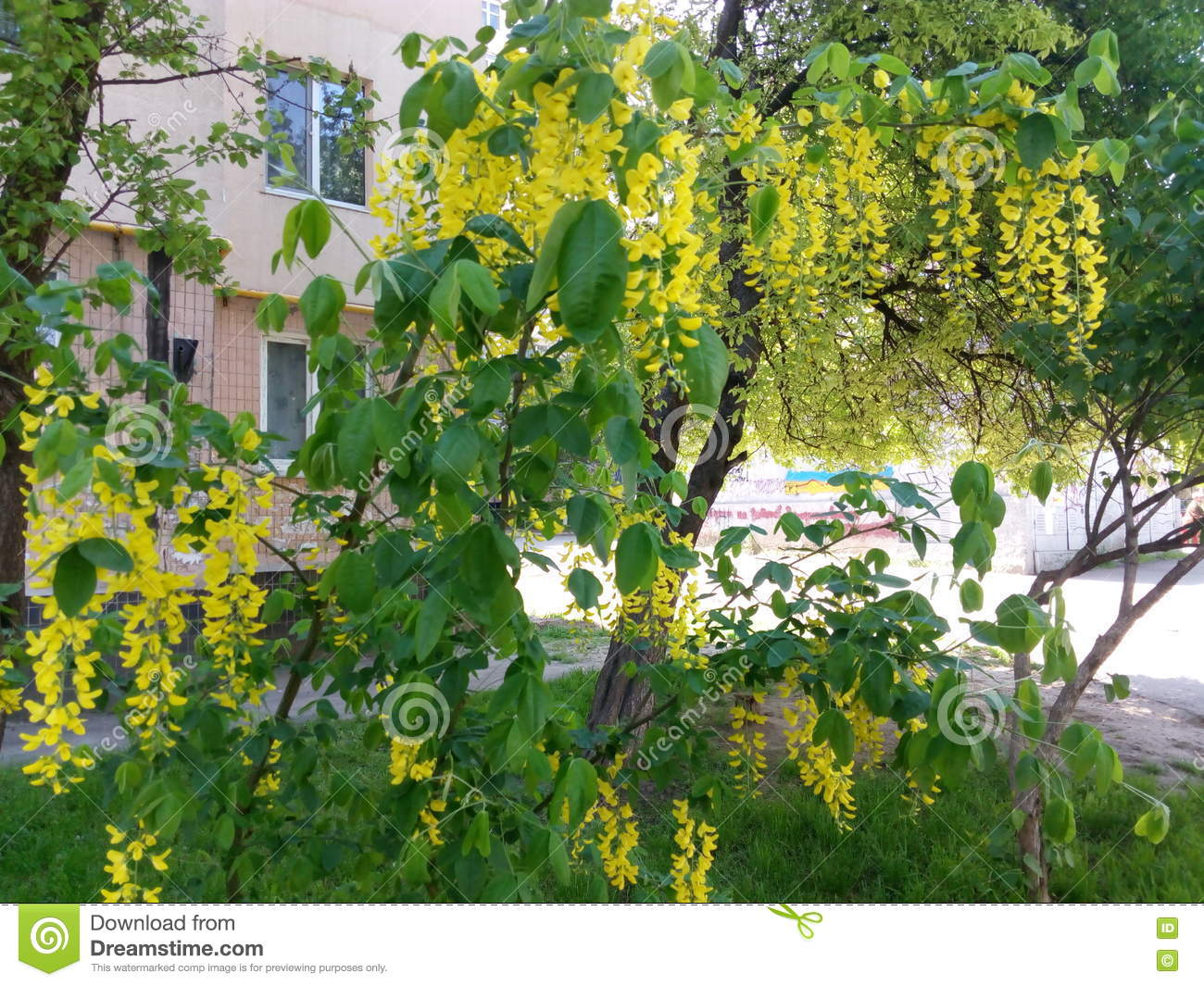 Branches Of A Blossoming Spring Tree With Small Yellow Flowers Stock