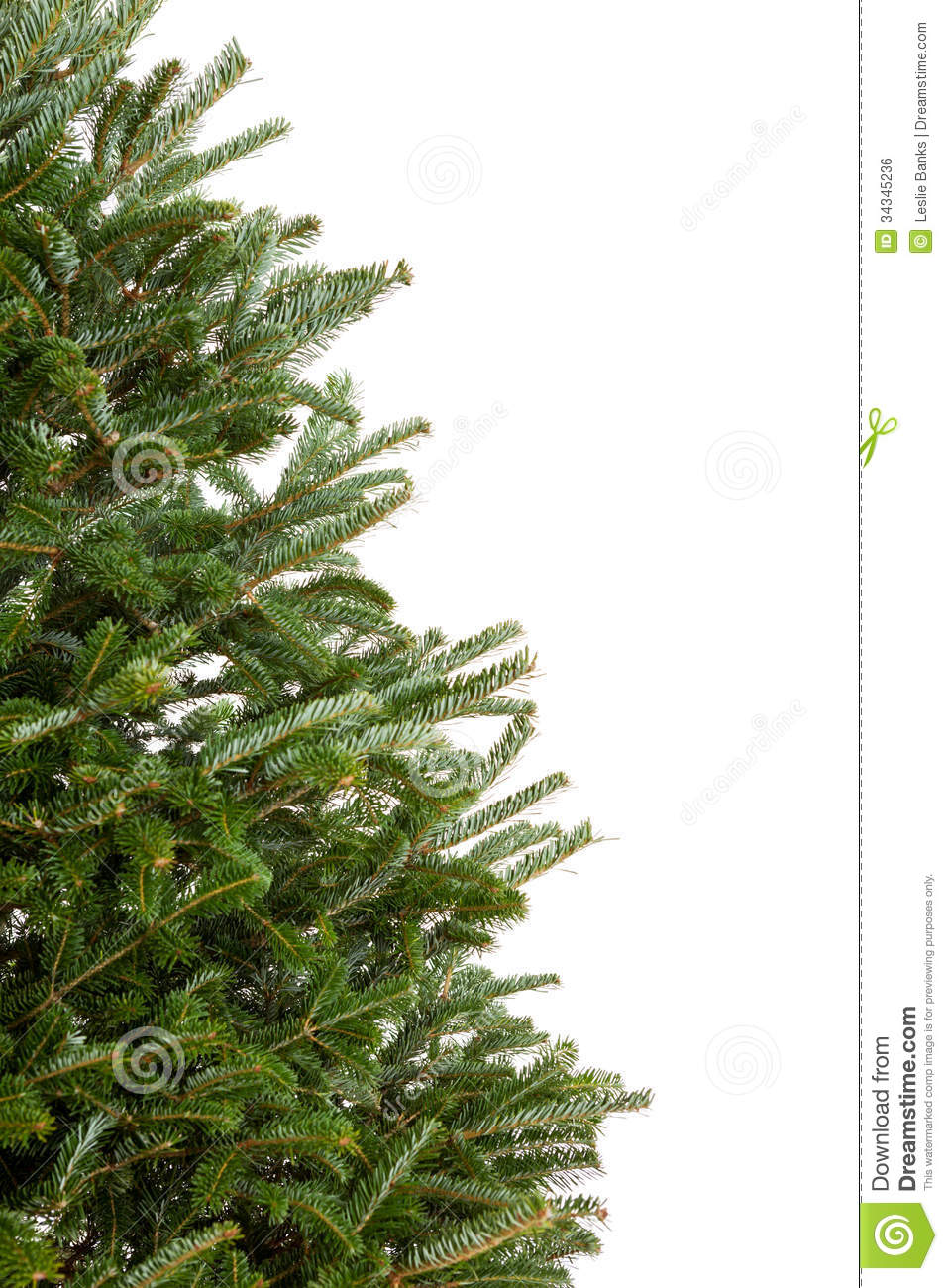 Branches Of A Christmas Tree Royalty Free Stock Image - Image ...
