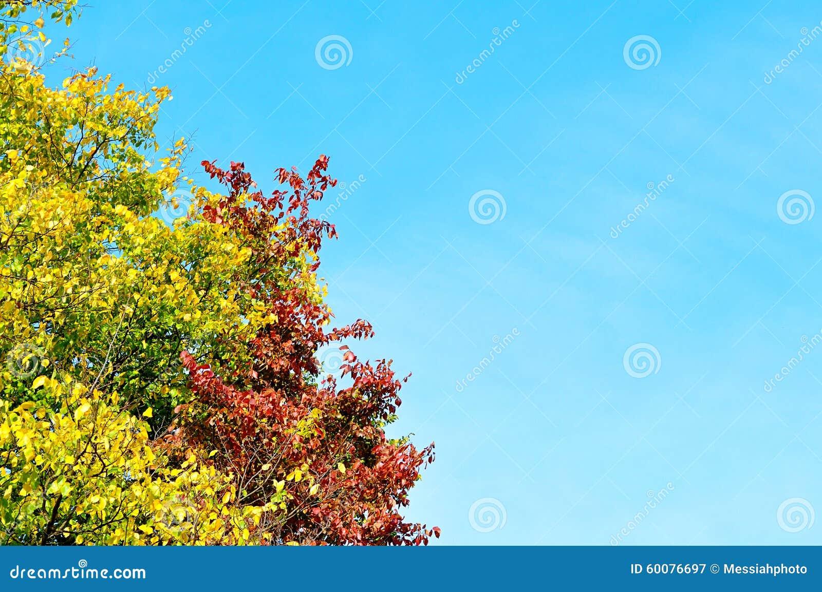 branches colorées d'arbre jauni sur le fond du ciel bleu image stock