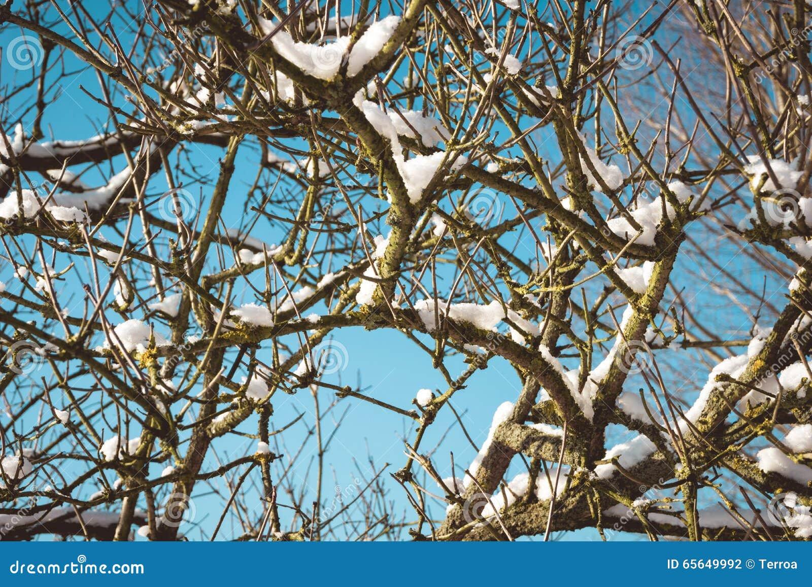 Branches couvertes de neige d un arbre