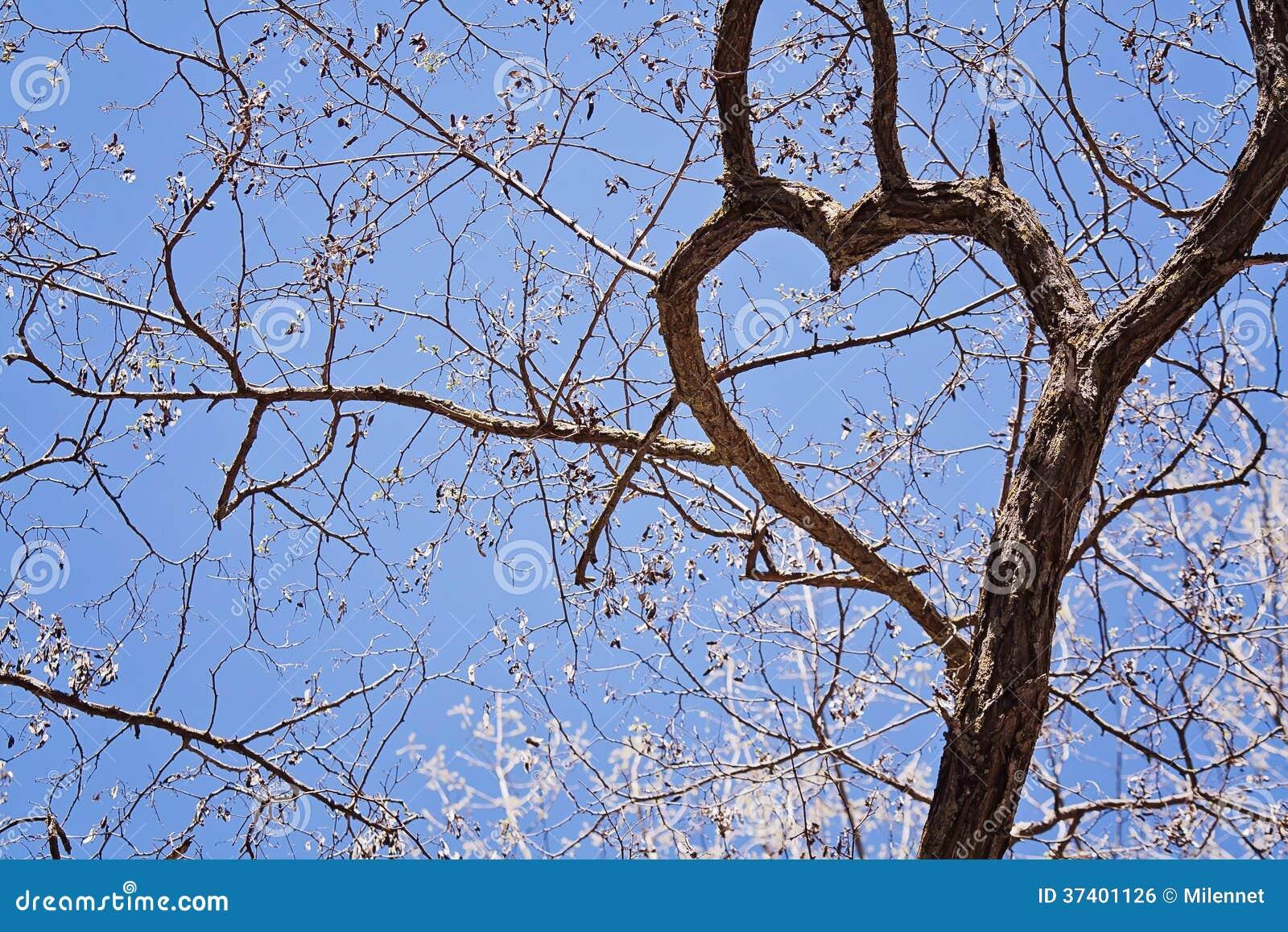 branches d 39 arbre avec en forme de coeur photo stock image du environnement amour 37401126. Black Bedroom Furniture Sets. Home Design Ideas