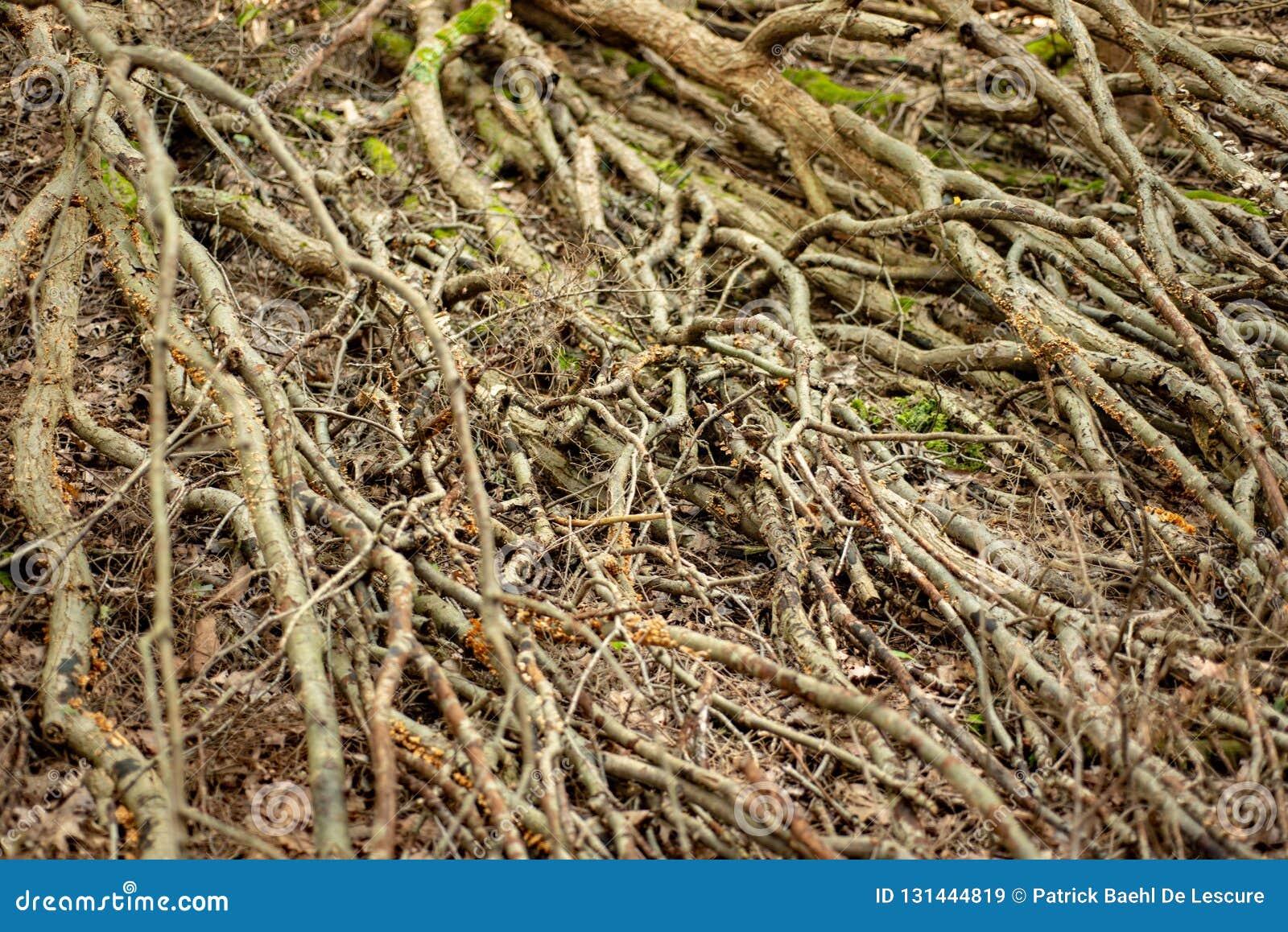 Branches d arbre sur le plancher de forêt