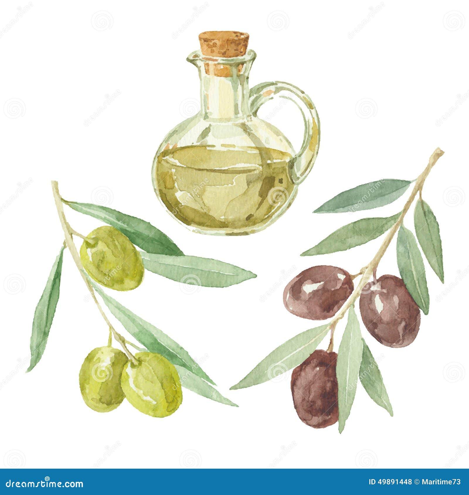 branches d 39 olivier et une bouteille du dessin d 39 huile d 39 olive par l 39 aquarelle illustration stock. Black Bedroom Furniture Sets. Home Design Ideas