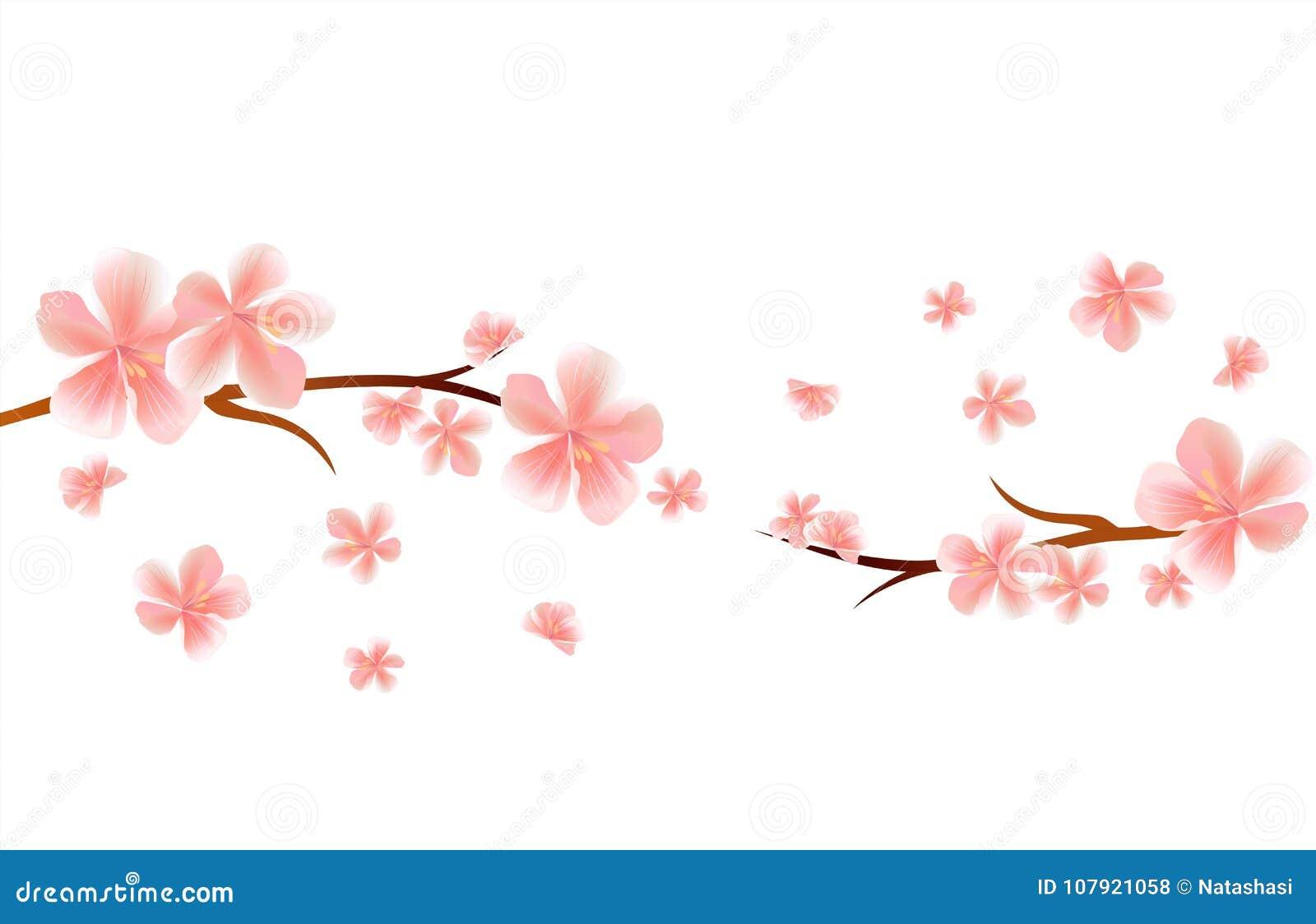 Branches De Fleur De Sakura Avec Les Fleurs Roses De Vol D Isolement