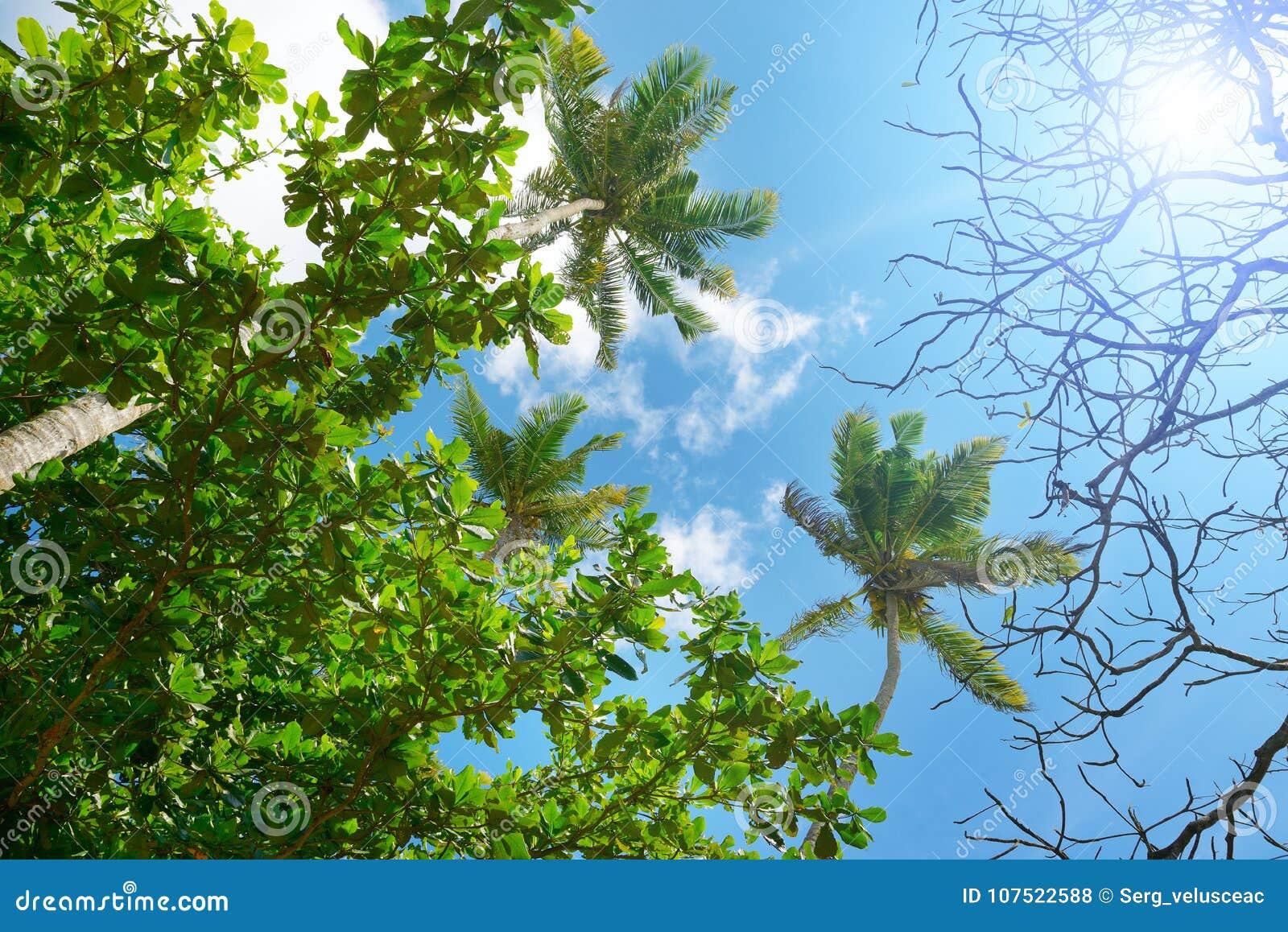Branches de palmier contre le beau ciel bleu