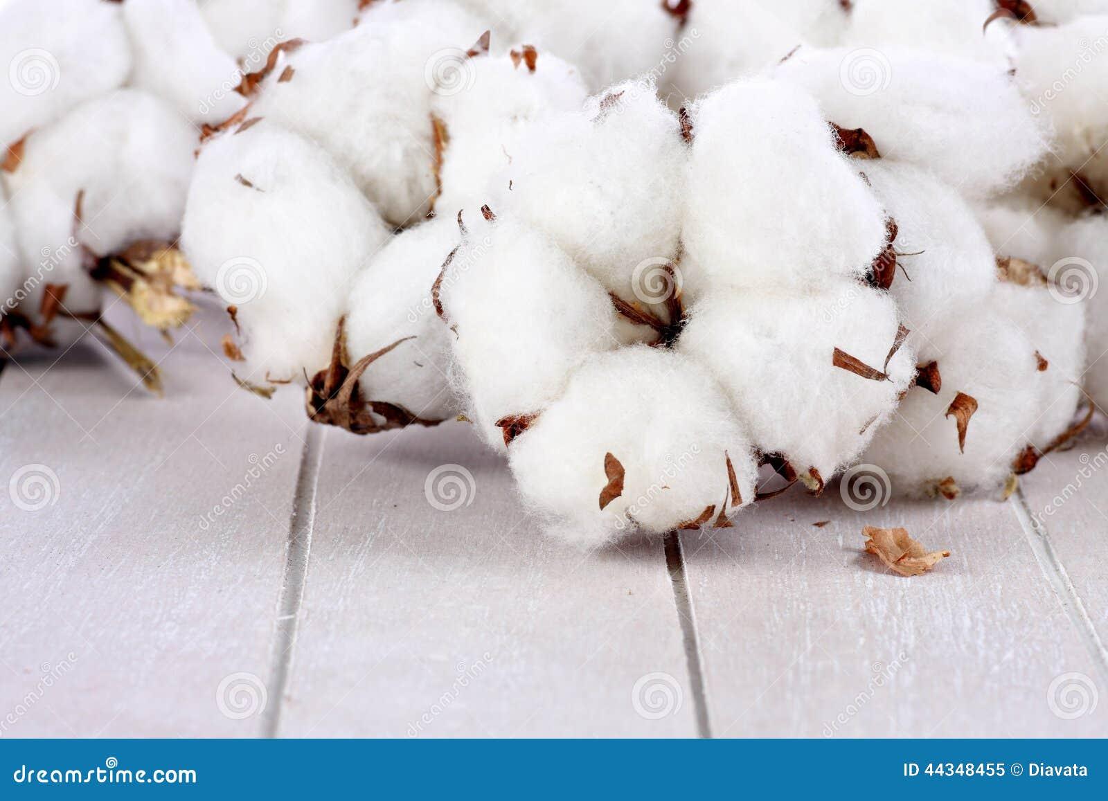 branches des boules de coton sur le bois photo stock image 44348455. Black Bedroom Furniture Sets. Home Design Ideas