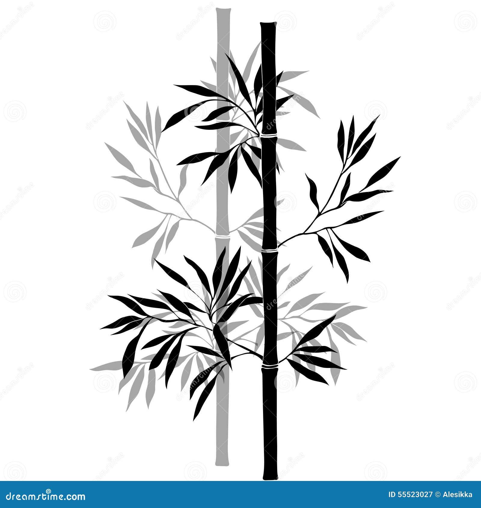 Branches en bambou d 39 isolement sur le fond blanc - Tout sur le bambou ...