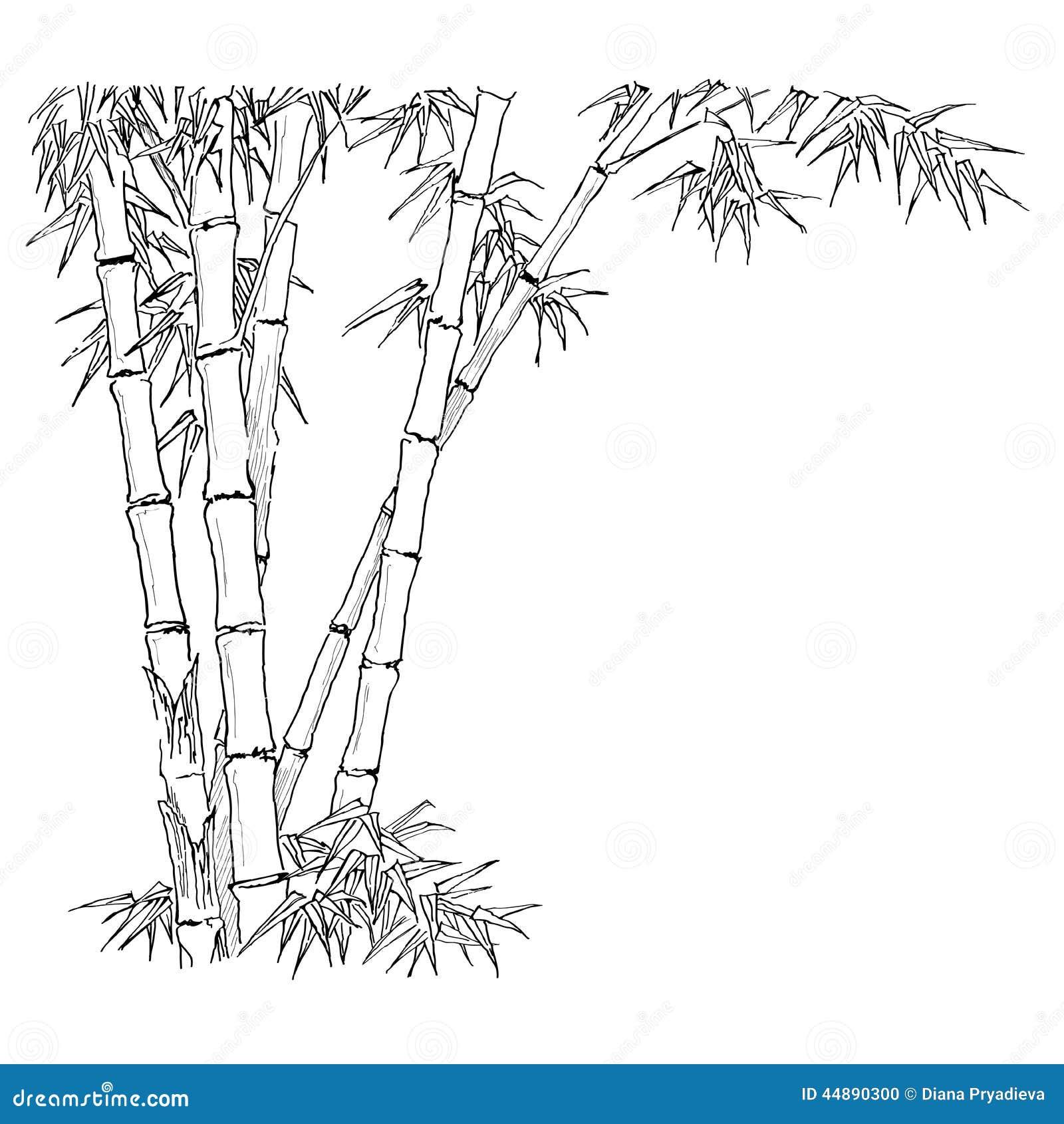Branches en bambou sur le fond blanc illustration de - Tout sur le bambou ...
