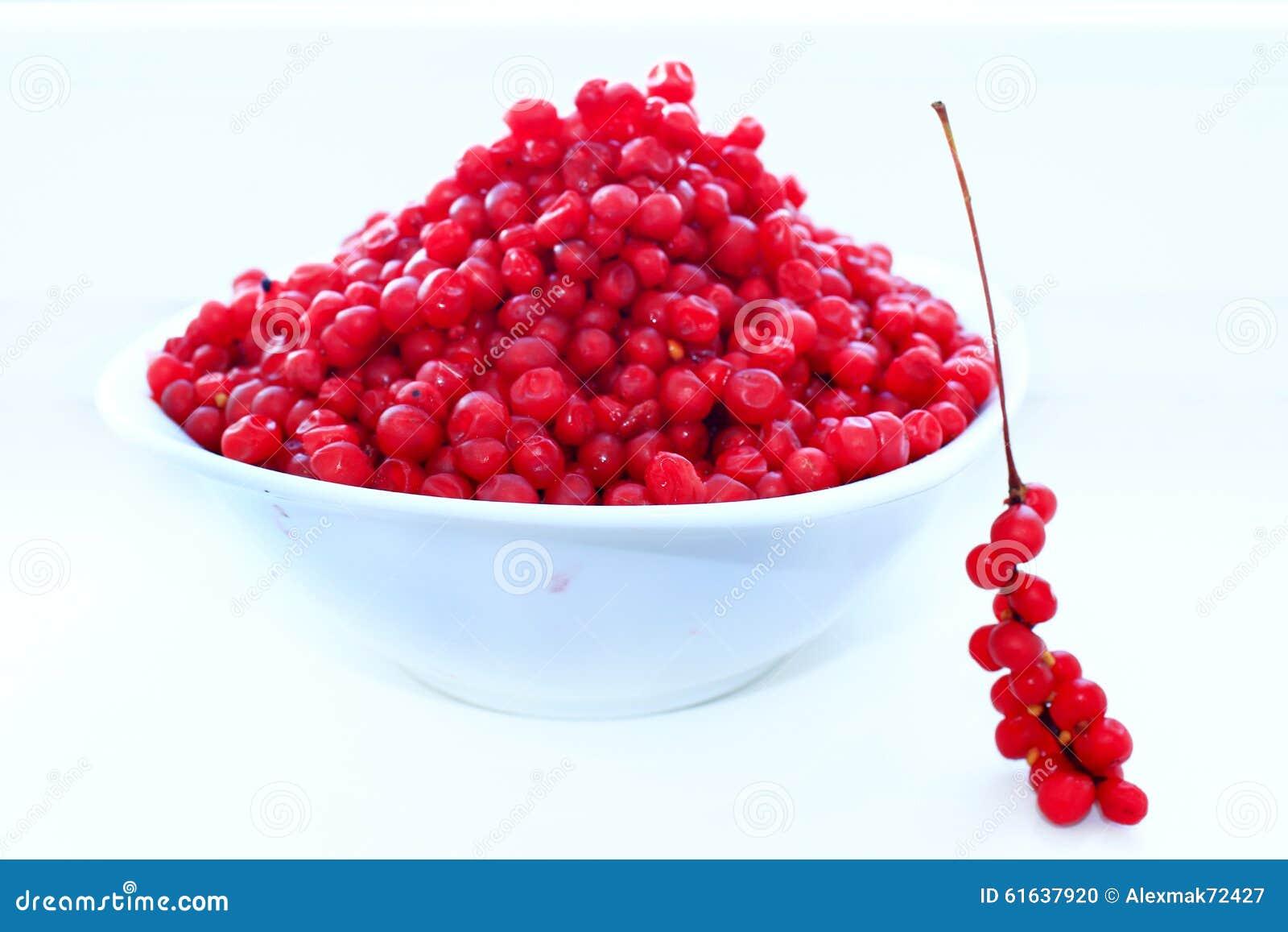 Branches et plein plat de schisandra mûr rouge