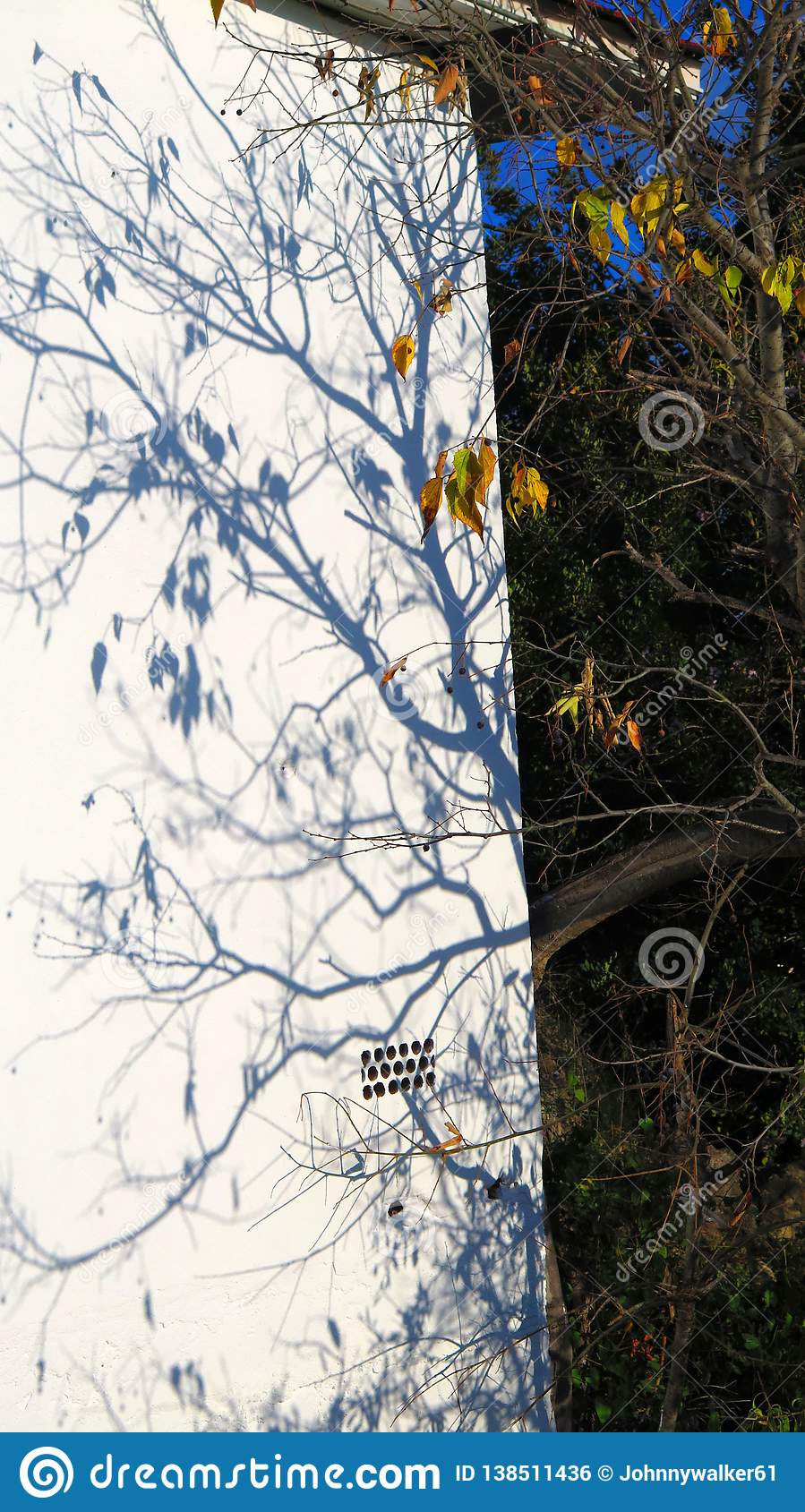Branches extending shadow onto white wall in Andalusian winter sunshine