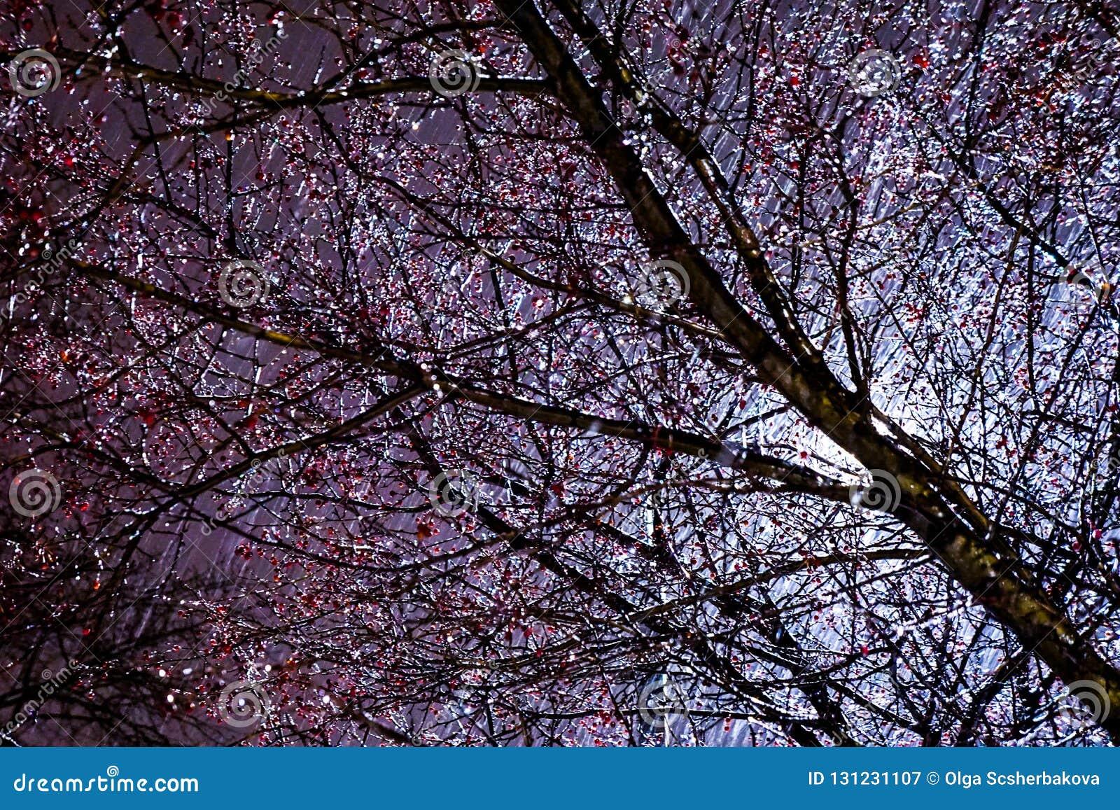 Branches Glacees Apres Tempete De Neige Image Stock Image Du Hiver