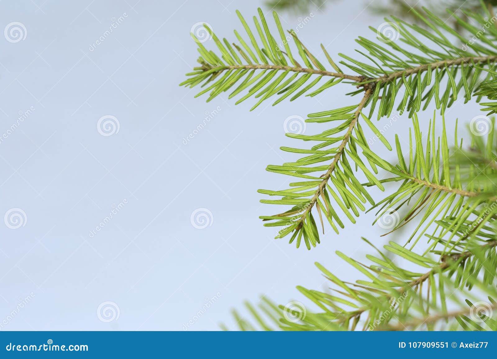 Dream Dream Fir, spruce, what dreams of Fir, spruce in a dream to see 90