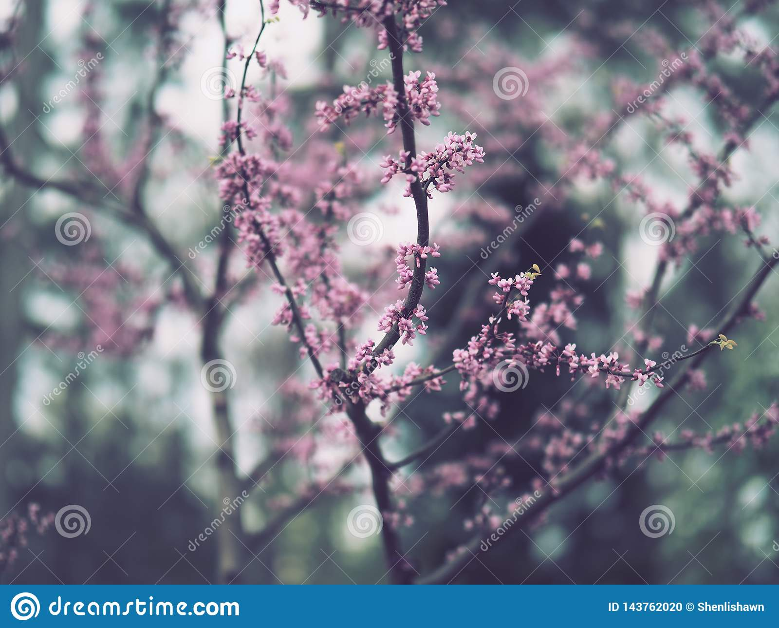 Branches with miniature purple flowers