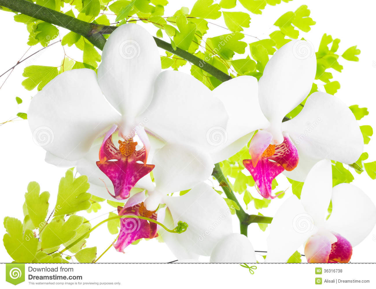 Branches of an orchid and fern are isolated
