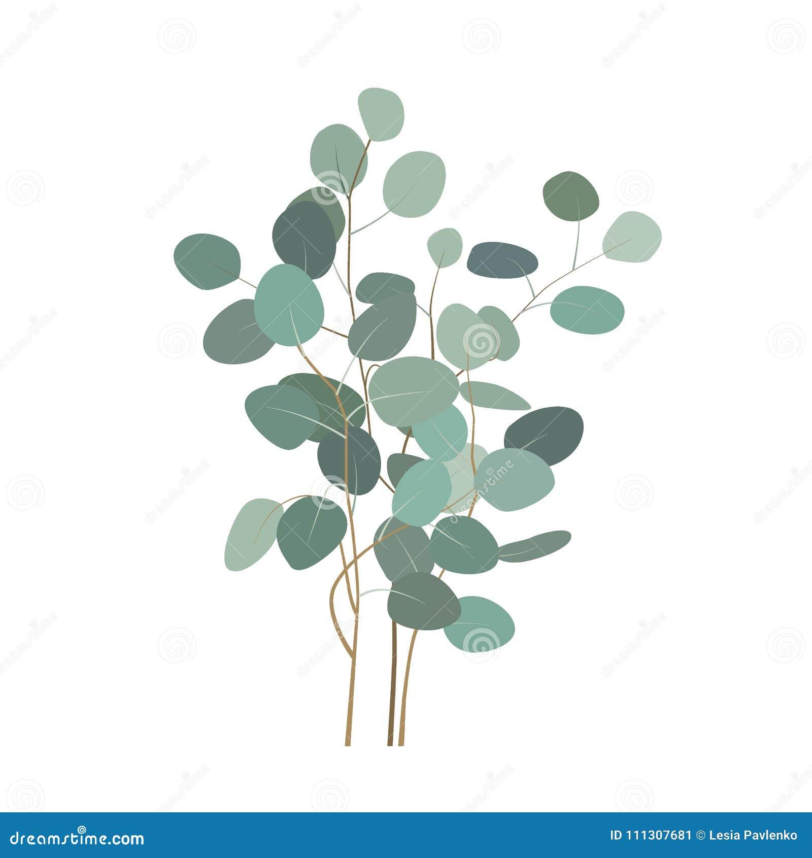branches ou bouquet d'eucalyptus de vecteur Éléments peints à la