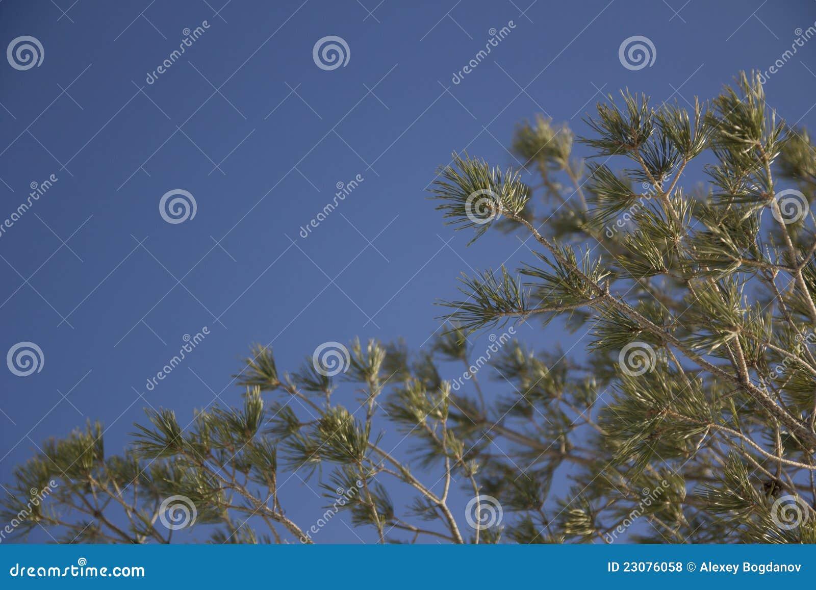 Branches pälstreen