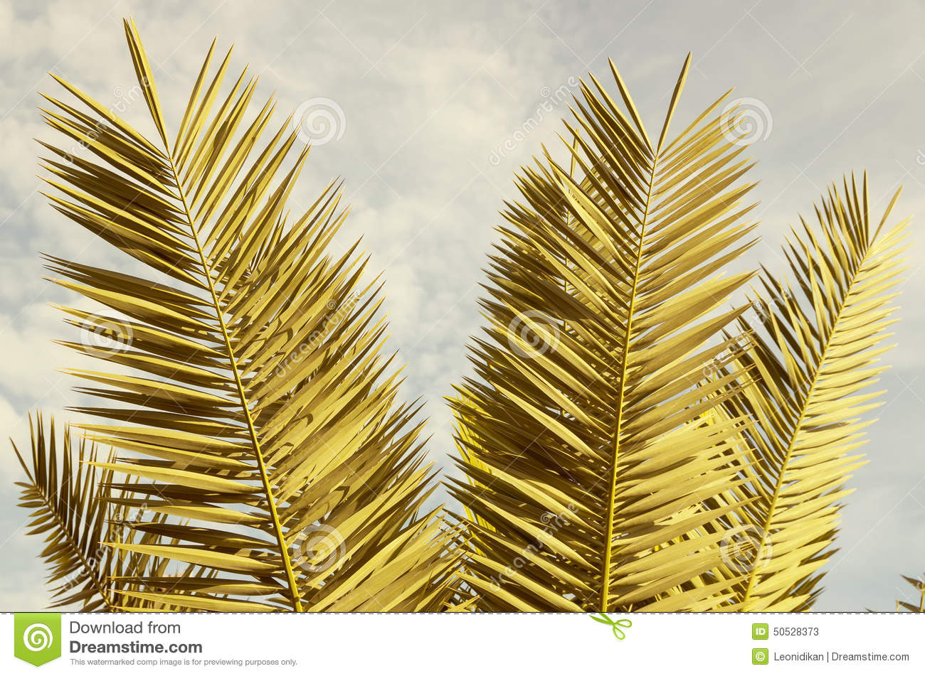 palm tree krone branches - photo #29