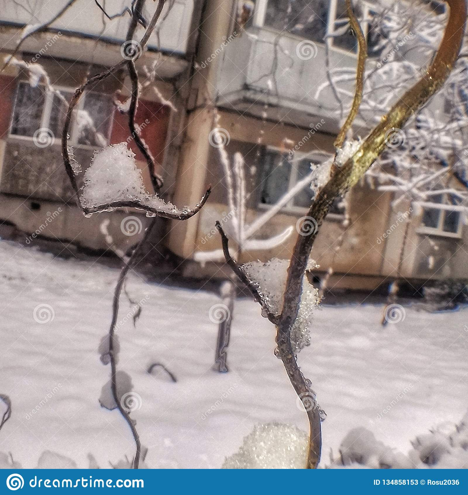 Branches pleines de la neige