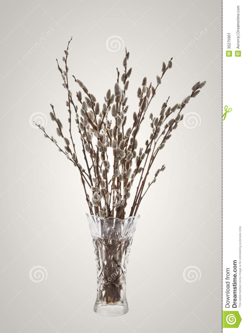 branches of the pussy willow with flowering bud in vase. Black Bedroom Furniture Sets. Home Design Ideas