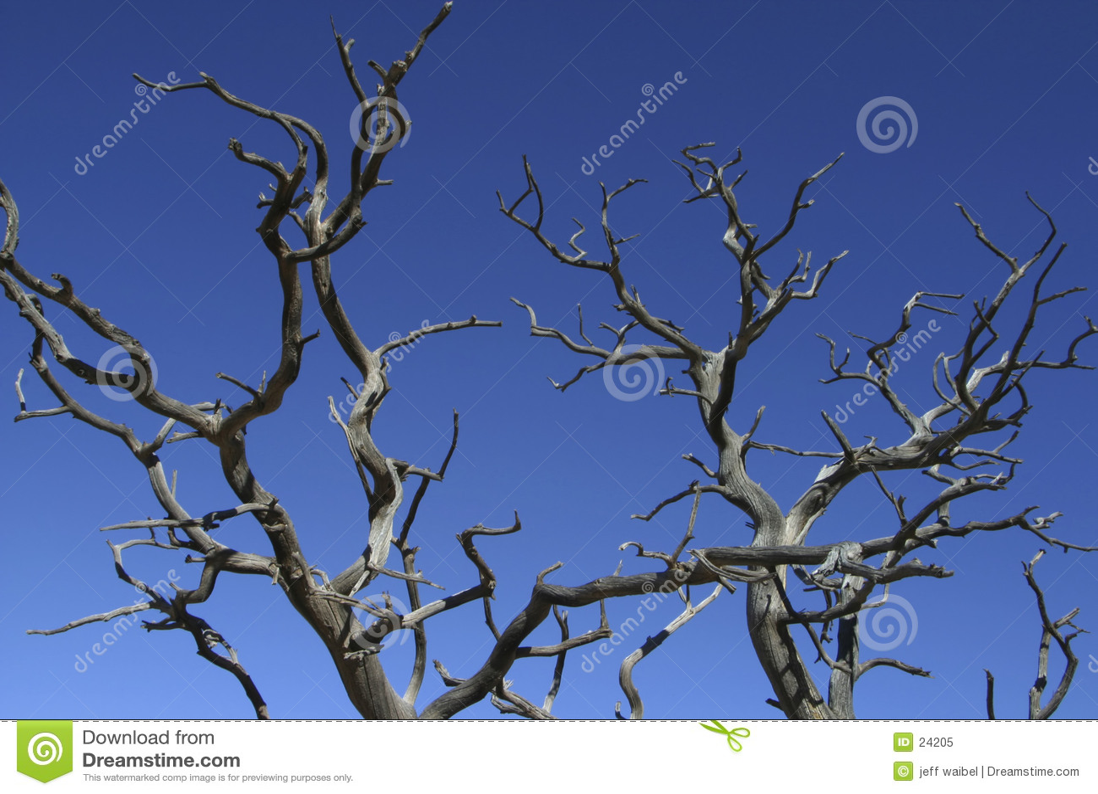 Branches reach skyward