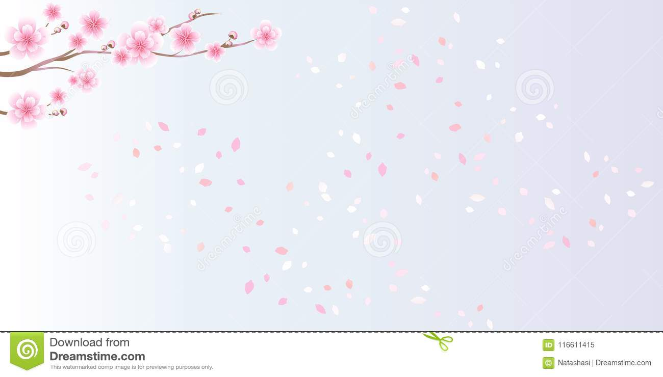 Branches of sakura. Cherry blossom and flying petals isolated on