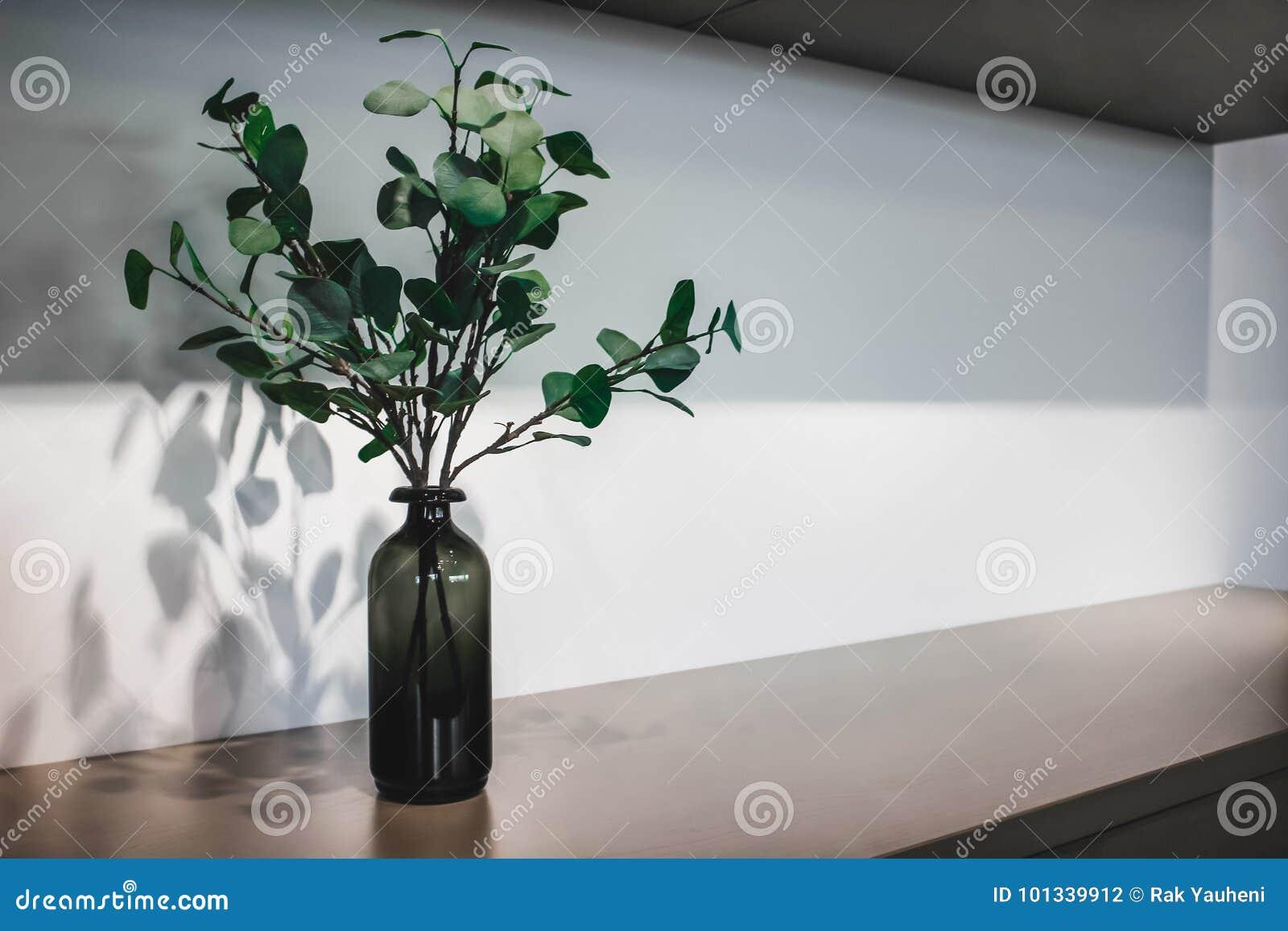 Branches vertes dans une bouteille foncée Lames d arbre Fond