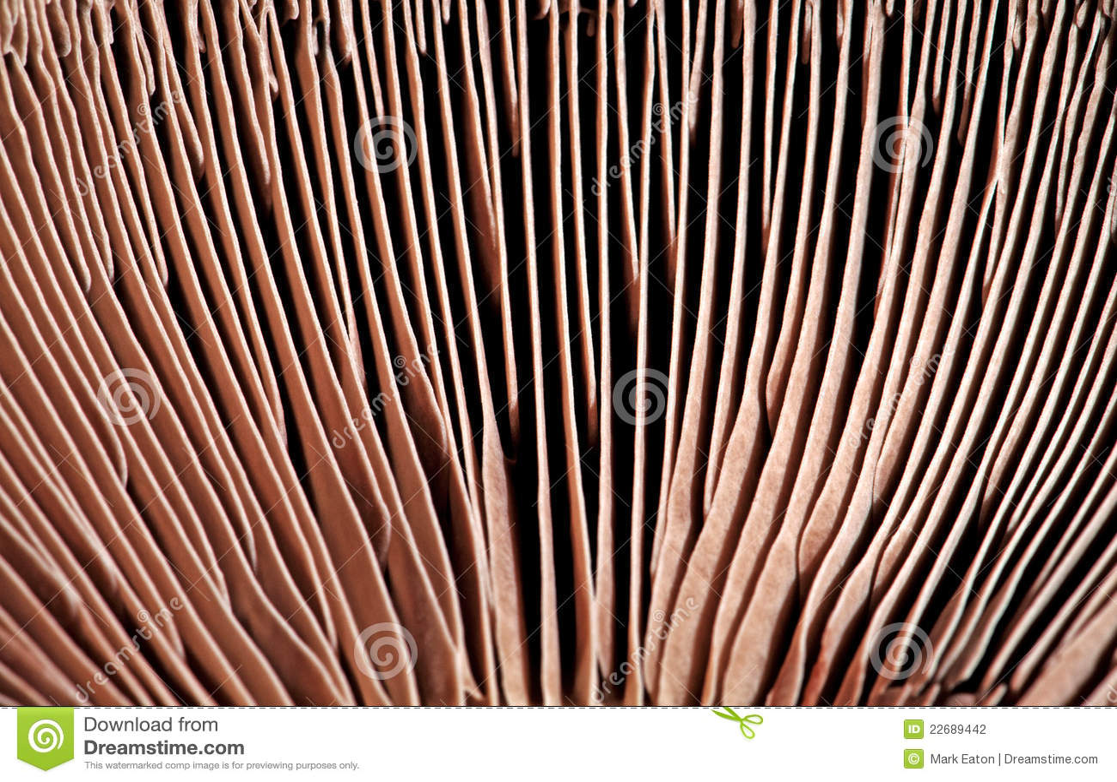 Branchie del fungo