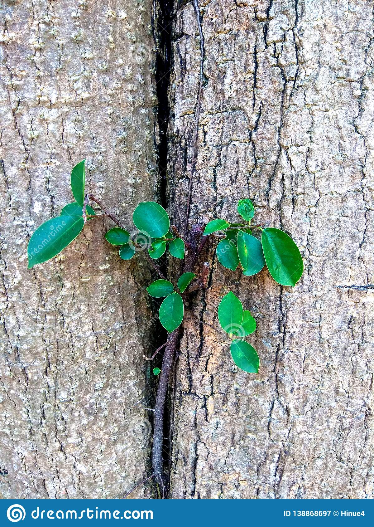 Branching plant beside of tree