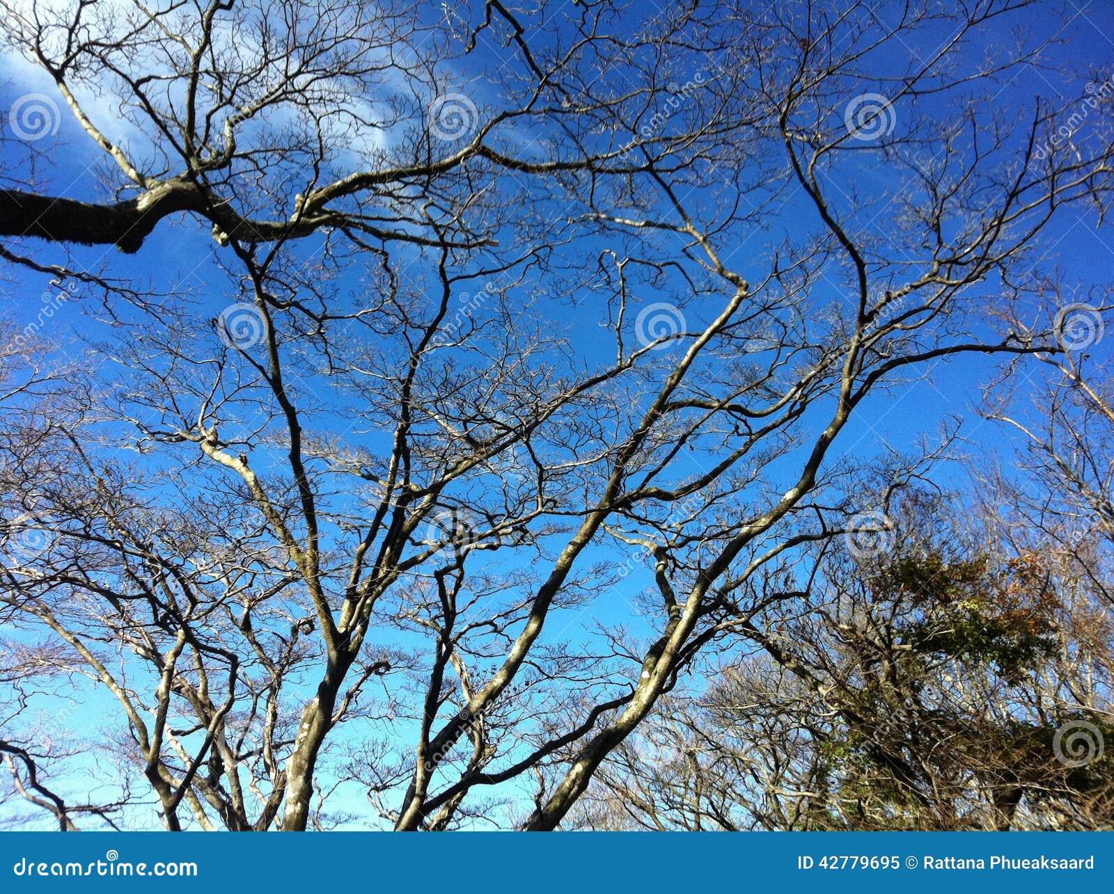 Branching tree