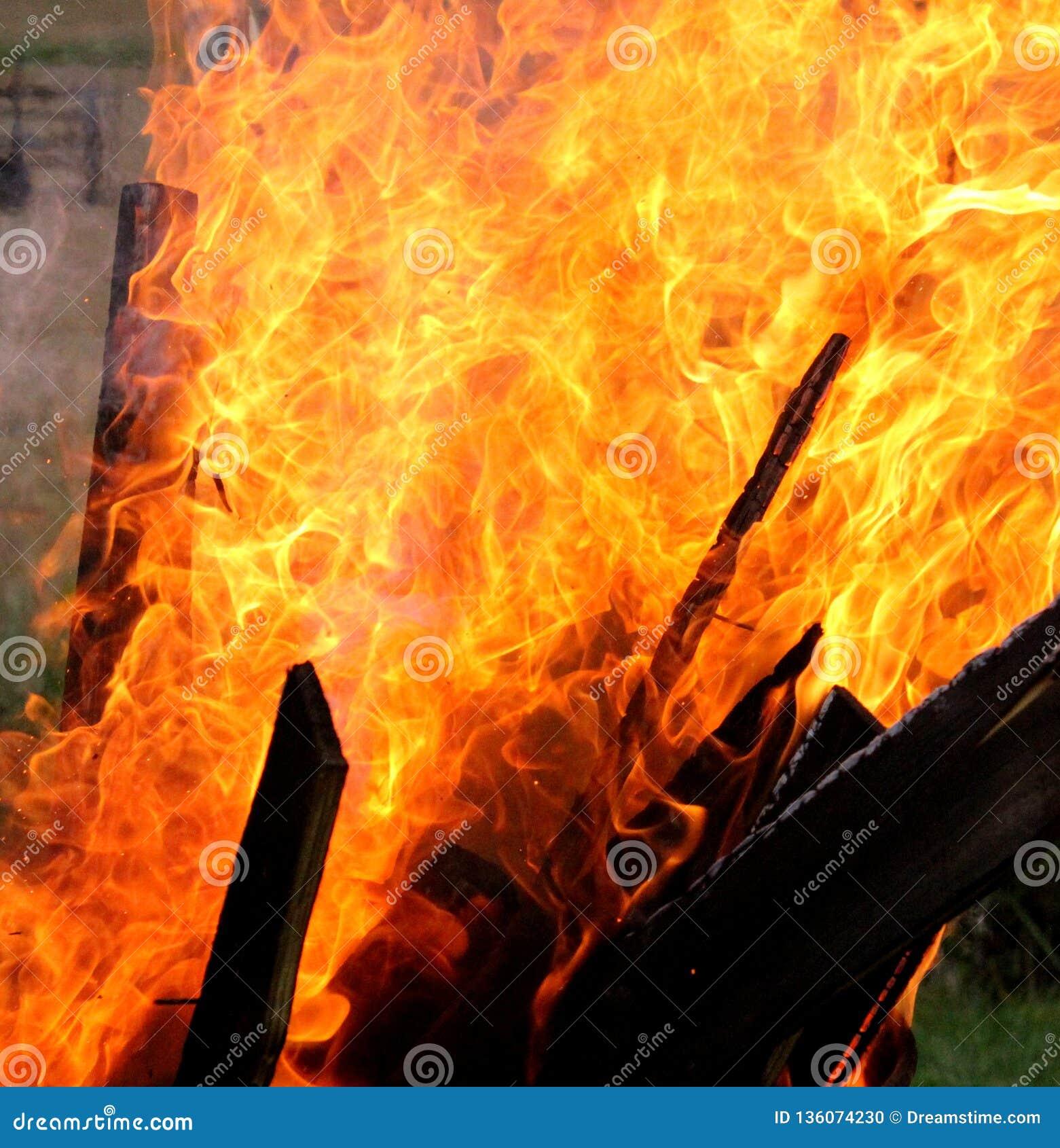 Brand bosrijk behang
