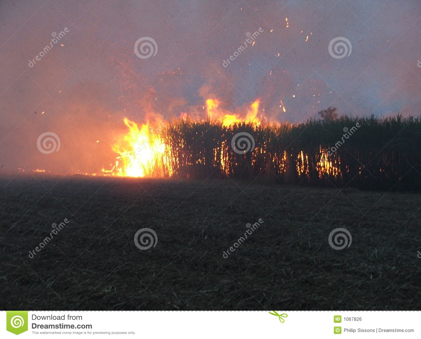 Brand för 2 buske