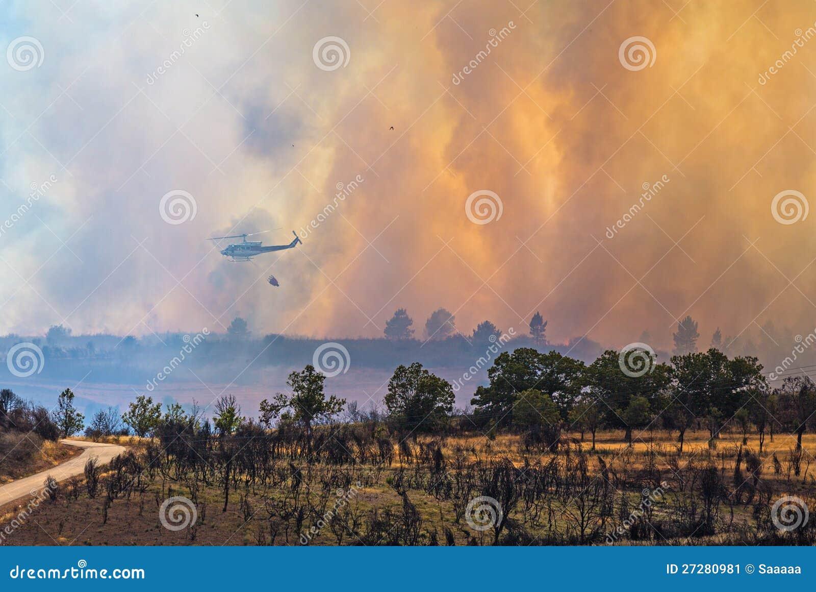 Brand i skogen