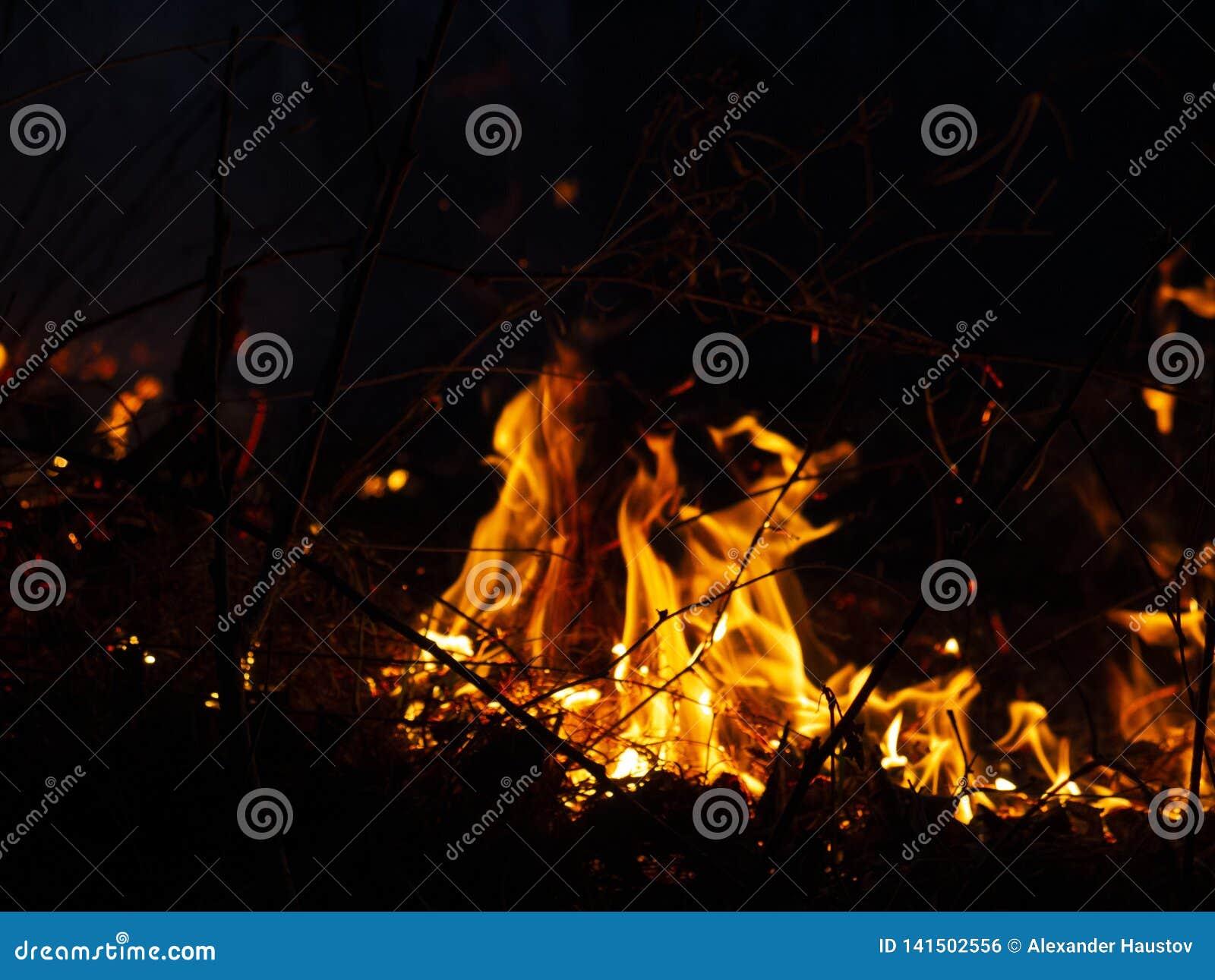 Brand löpeld, brinnande pinjeskog i röken och flammor