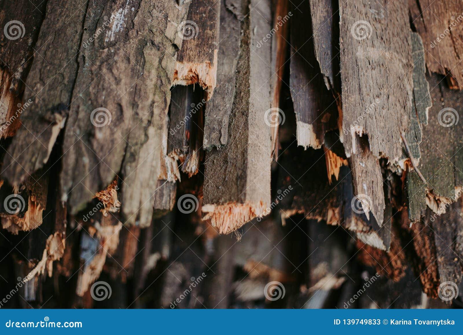 Brandhout, voor brand, in een vlakke stapel wordt gestapeld die Muurbrandhout