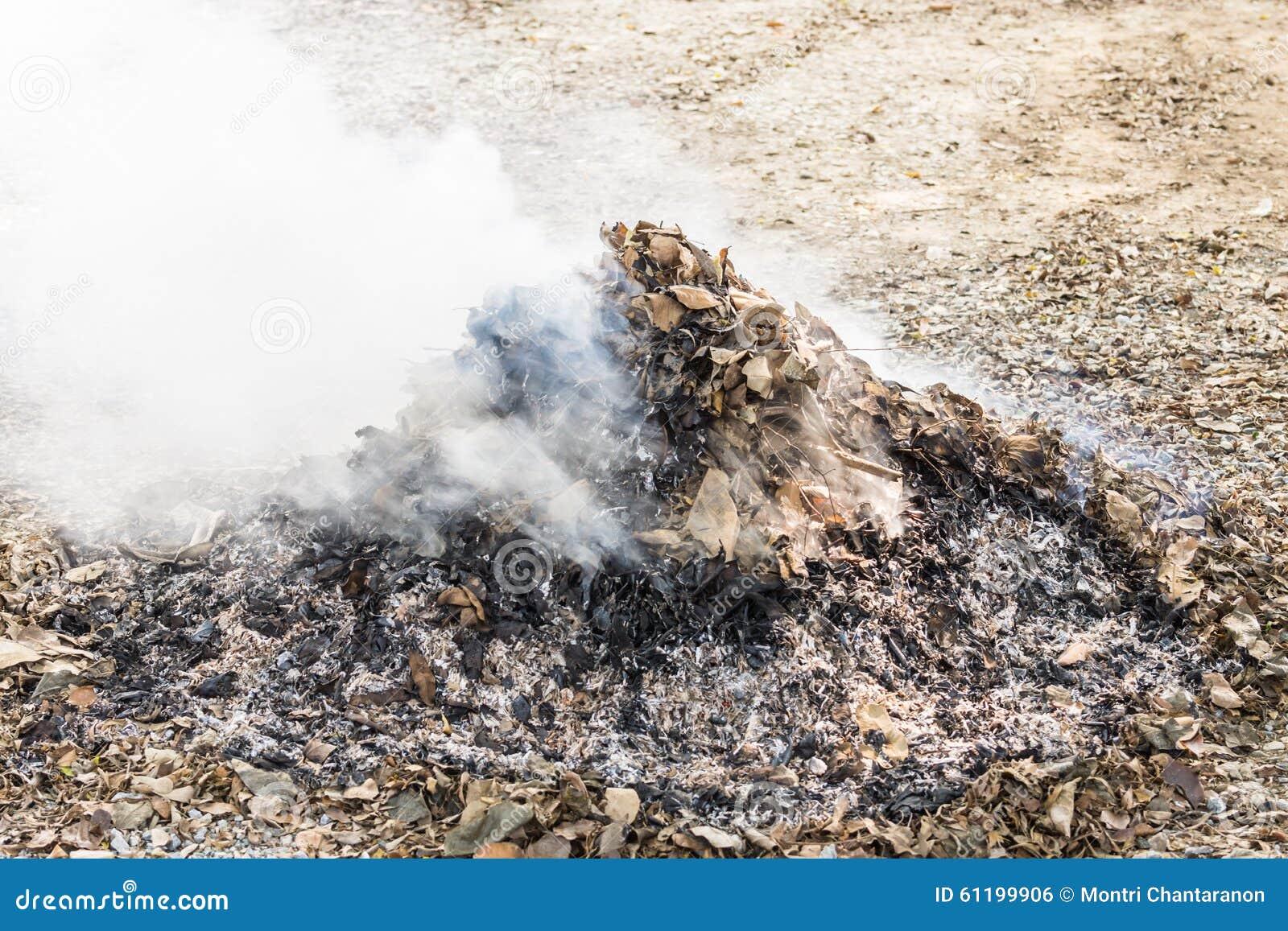 Brandwond droge bladeren