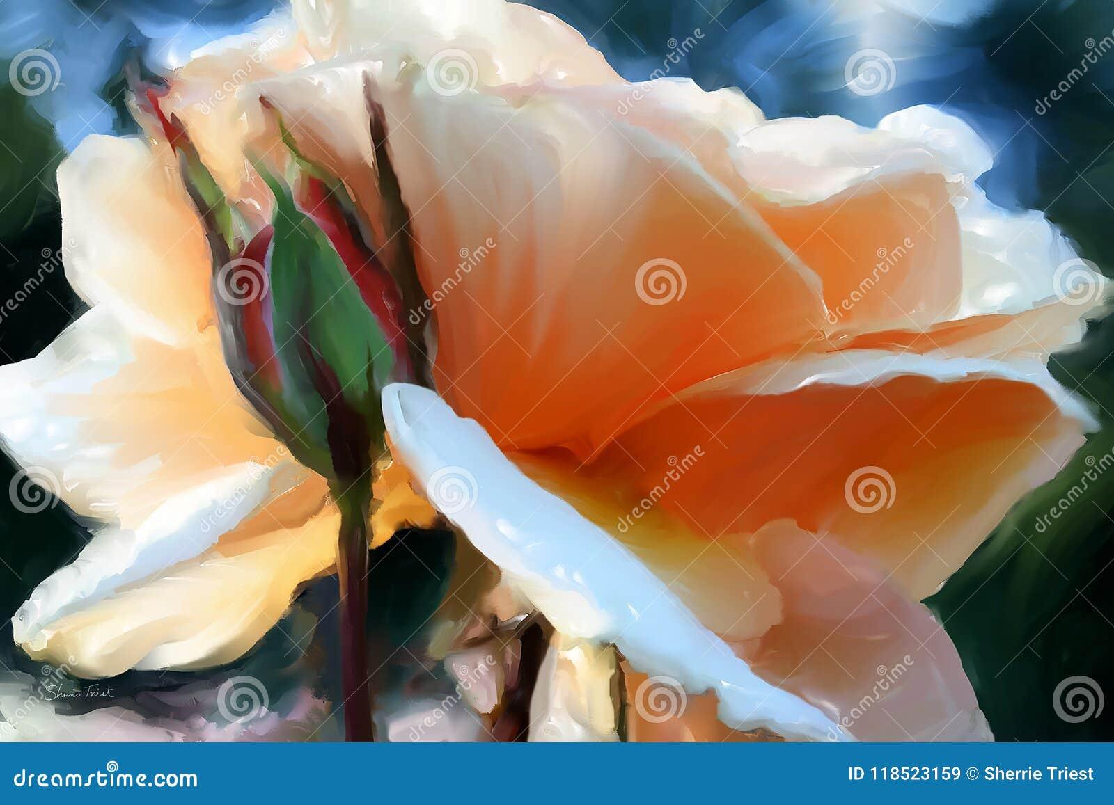 Brandy róży okwitnięcie