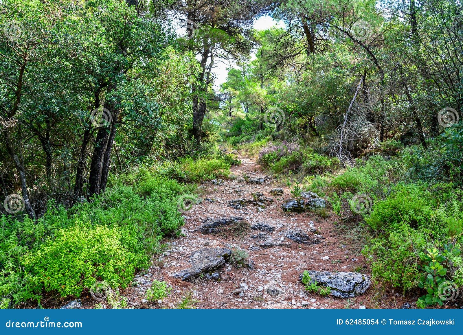 Brant skogbana på den Skopelos ön