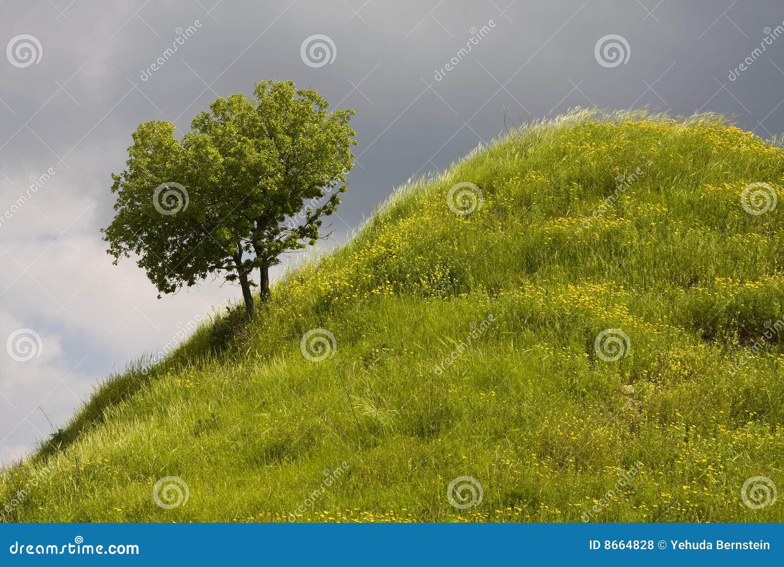 Brant tree för back