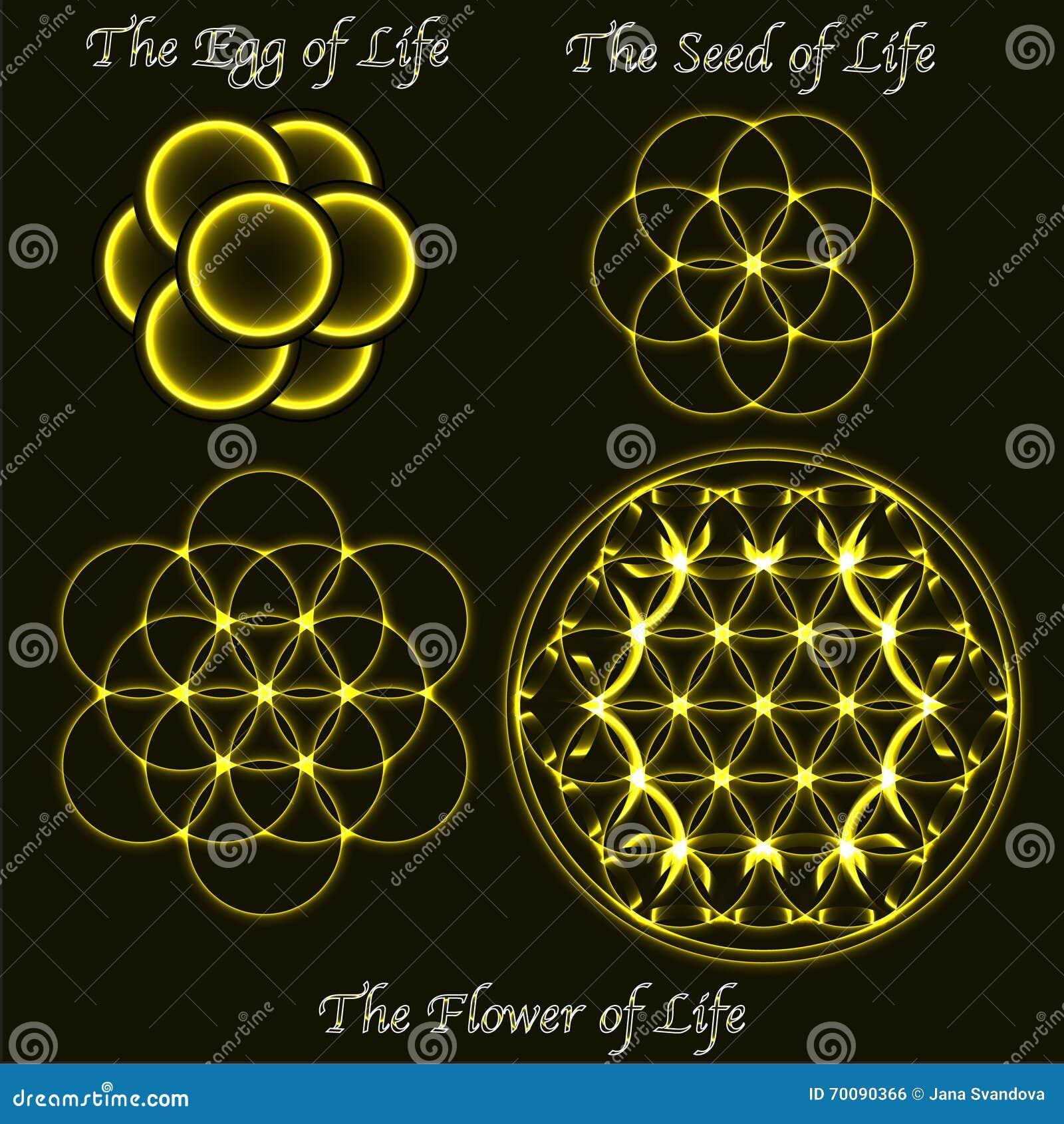 seed flower evolution game